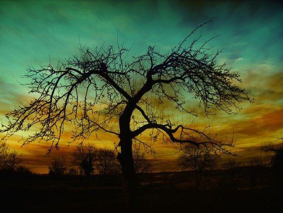 bien etre equlibre arbre energie feng shui stell art vendee 85